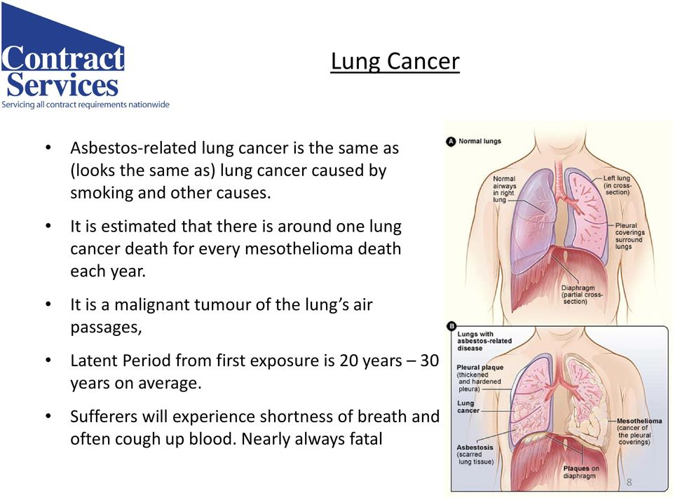 It is estimated that there is around one lung cancer death for every mesotheliomadeath each year.