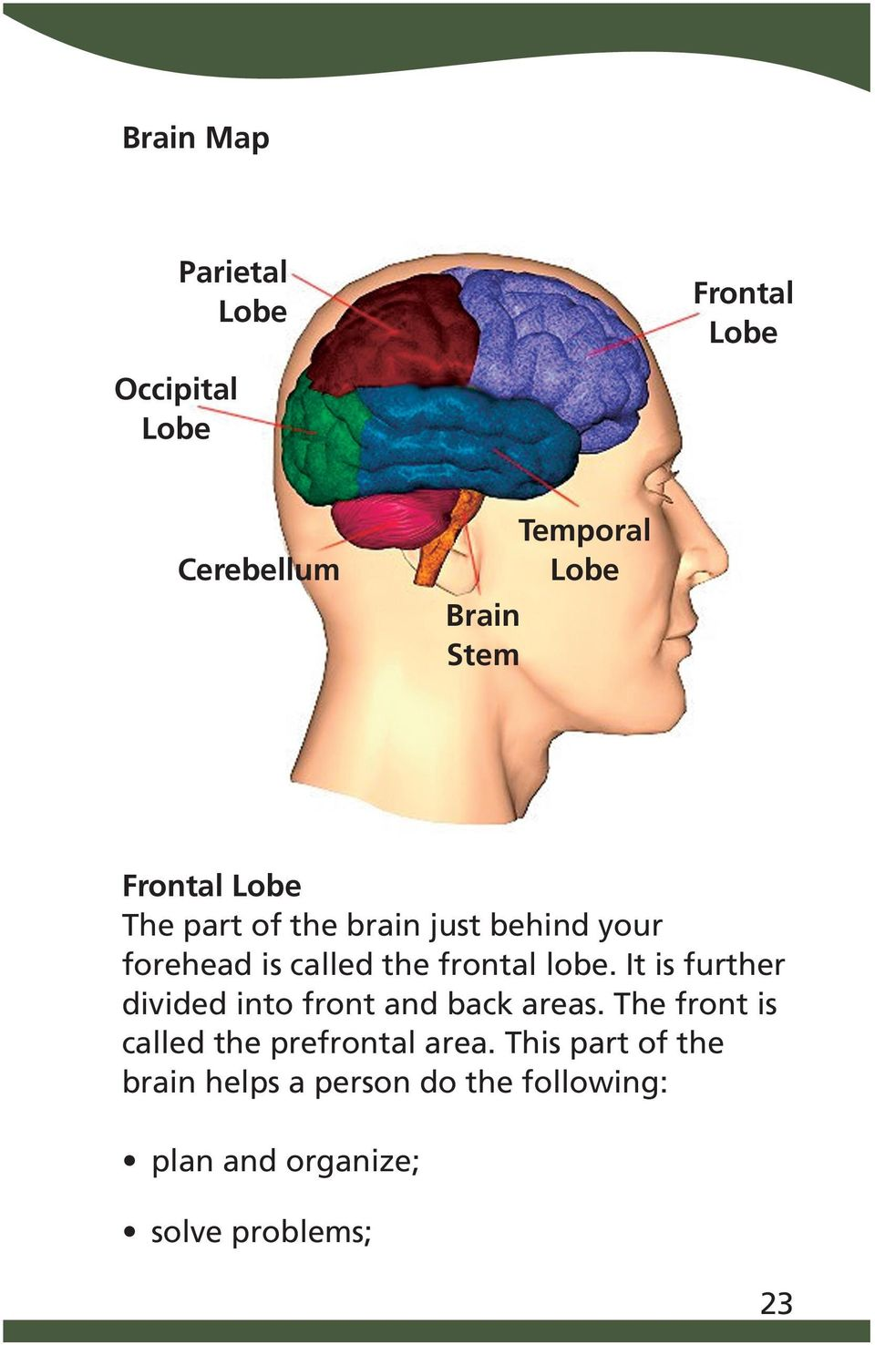 It is further divided into front and back areas. The front is called the prefrontal area.