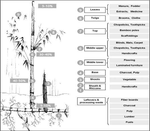 Value Chain Analysis Of Forest Products In Koshi Hill