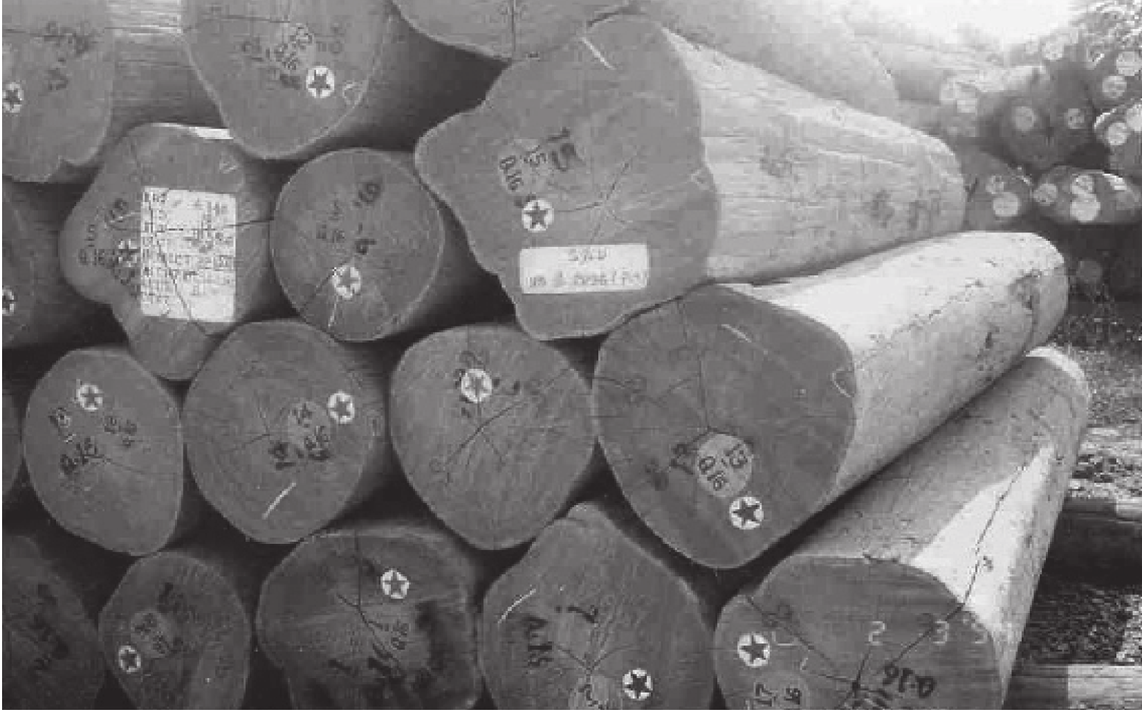 Teak Wood Products Of Planted Forests Pdf