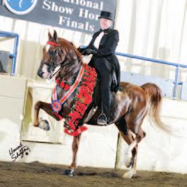 CONTENTS ON THE COVER SHOW HORSE DEPARTMENTS & RESOURCES