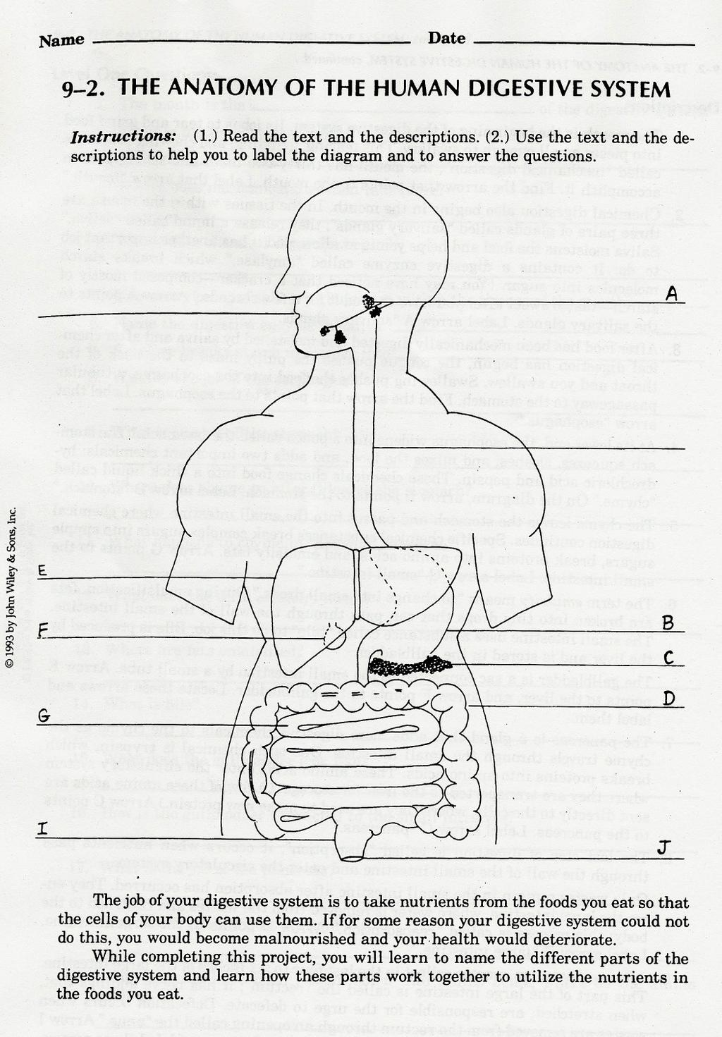 9 1 Nutrition And The Digestive System Pdf