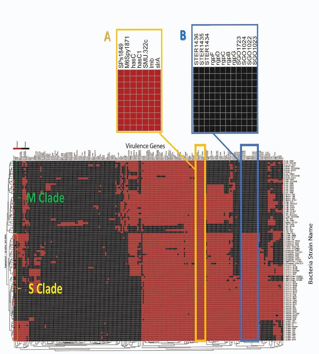 Sequencing And Comparative Genome Analysis Of Streptococcus 19775 0 Gm Engine Diagram Figure 57 An Informative Heat Map Generated By Pathoprot Tool