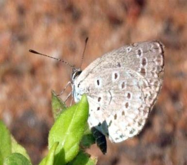 A preliminary study on diversity of butterflies (Lepidoptera