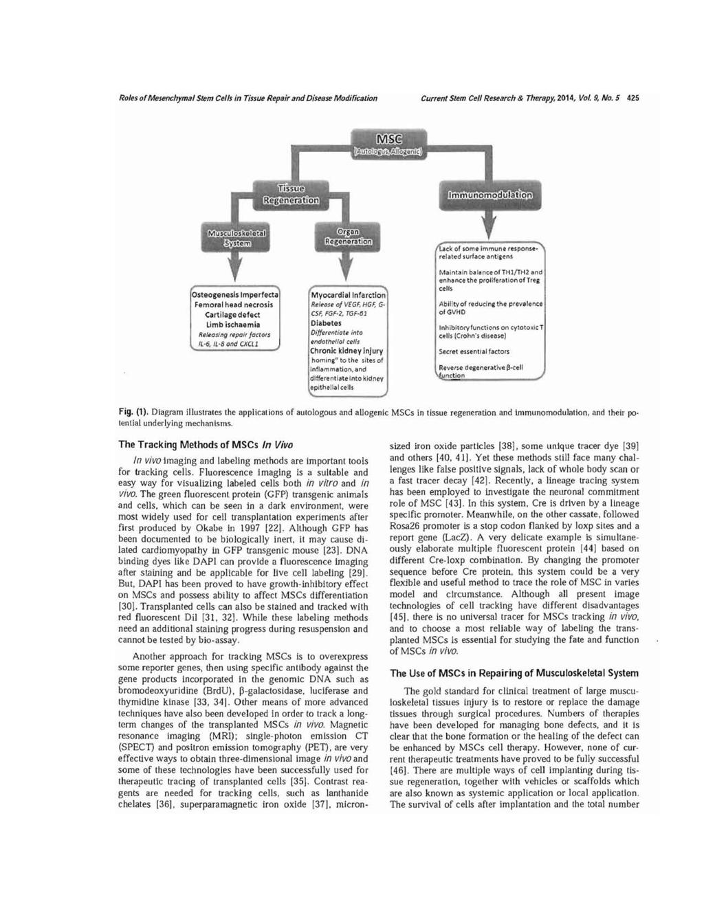 The Roles of Mesenchymal Stem Cells in Tissue Repair and