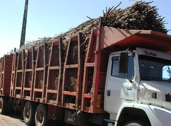 A SIMULATION STUDY OF CANE TRANSPORT SYSTEM IMPROVEMENTS IN