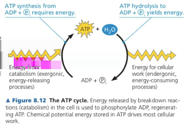 Forms of Energy, Laws of Energy Transformation and Role of