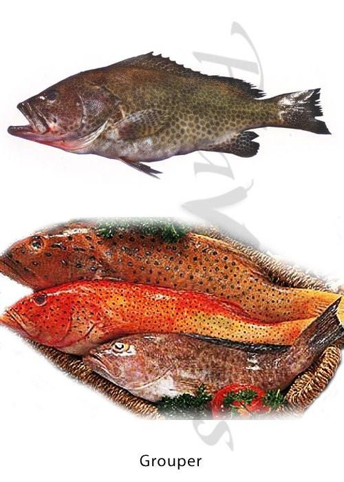 The freshness Factor - How to buy Fresh Fish' - PDF