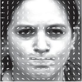 Micro-Expression Extraction For Lie Detection Using Eulerian