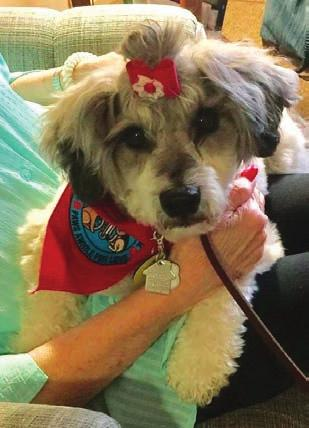 Happy Summer!!! THERAPY DOGS INTERNATIONAL A DOG WILL LOVE