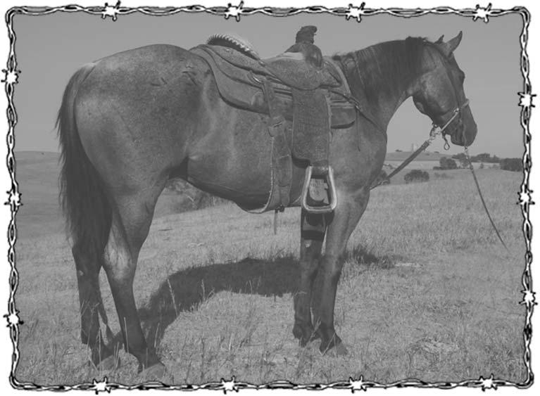 1 Hands This Sorrel Gelding Has Chrome And Disposition To Spare Tuffy Done