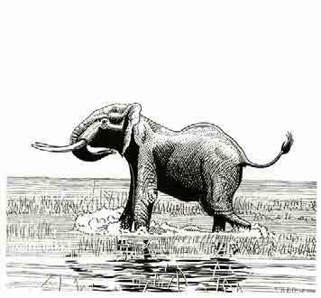 8b0d63c5b38 LARGE ANIMALS AND WIDE HORIZONS  ADVENTURES OF A BIOLOGIST. The  Autobiography of RICHARD M. LAWS PART II. Hippos tears and Elephants tusks  - PDF