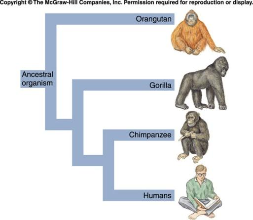 Chapter 13: Evolution and Natural Selection - PDF