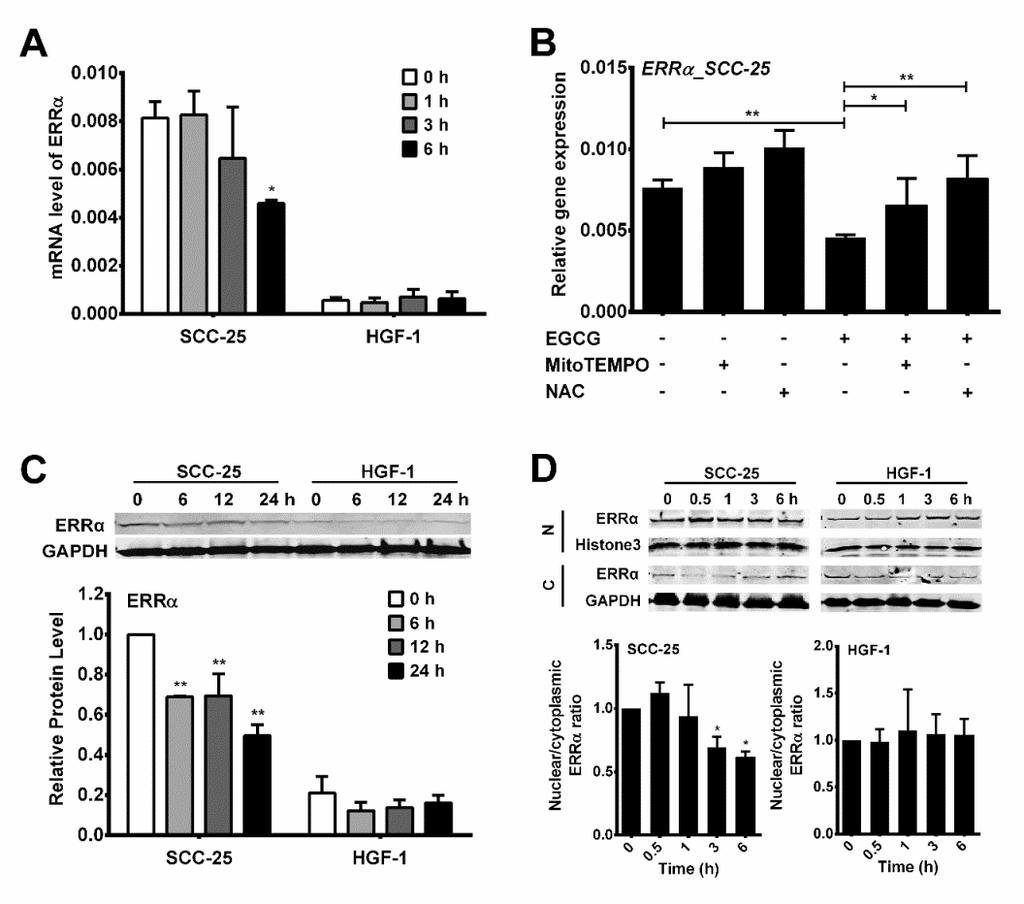 92 Figure 3-3. EGCG-induced differential changes of ERRα expression and nuclear localization in oral cells. (A) Cells were treated with 100 µm EGCG for 0-6 h.