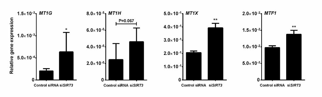 117 Figure 4-2. The upregulation of MT genes in si-sirt3 cells. SCC-25 cells were transfected with Control (si-control) or SIRT3 (si-sirt3) sirna.