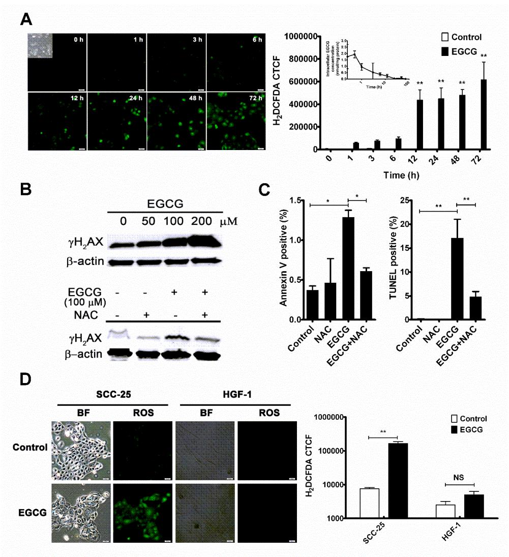 54 Figure 2-2. EGCG-induced differential oxidative environments in SCC-25 and HGF-1 cells.