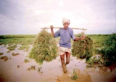 Kaapor Ethnobotany―the Historical Ecology of Plant Utilization by an ian People Footprints of the Forest